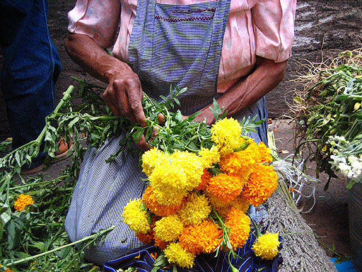 Flor utilizada en Día de Muertos