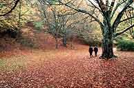 Dos personas dando un paseo por la Sierra el Rincón. (Foto: M. Estebaranz)
