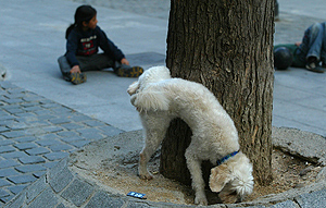 ¿Cómo tener un perro perfecto?'(parte 2)