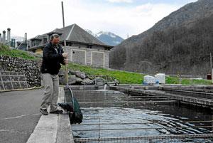 Un especialista recoge a un esturión de la piscifactoría de Les. (Foto: Laurent Sansen)