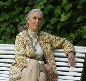 Jane Goodall, una de las más prestigiosas primatólogas del mundo por sus investigaciones sobre los chimpancés. (Foto: Quique García)