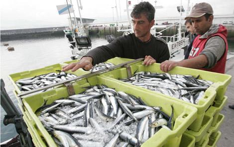 Dos mozos descargan cajas de anchoa en Fuenterrabia. | David de Haro