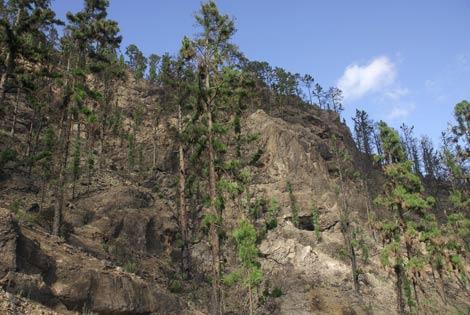 Fotografía tomada en diciembre de 2008, en la que se observan los brotes verdes de los árboles, cuando aún el terreno muestra el color negro de la calcinación. | Pascual Calabuig