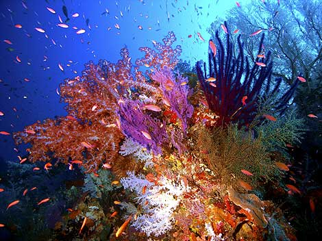 Parque de Arrecifes Marinos Tubbataha, Filipinas. | EFE.