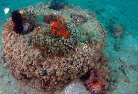 Vista superior de una estructura de cemento colonizada por especies marinas. | Efe