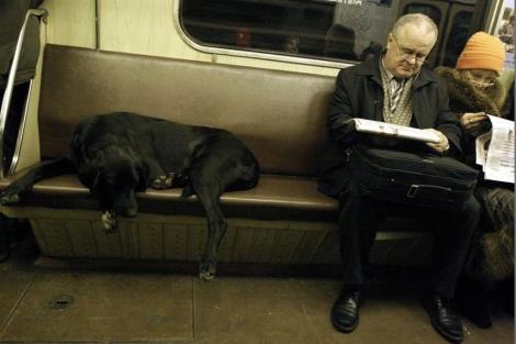 Un perro extraviado en el metro. | AP
