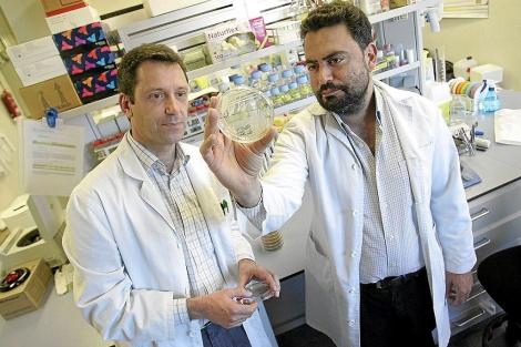 Sebastià Albertí y Antoni Oliver, investigadores del Grupo de Infección e Inmunidad del IUNICS | Jordi Avellà