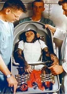 El chimpancé Ham se prepara para su viaje. | NASA