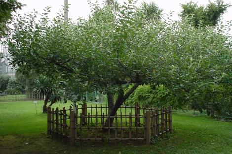 El manzano vallado.| ELMUNDO.