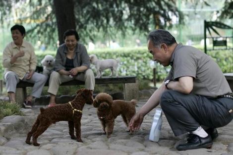 Un hombre observa a dos perros en un parque de Shanghai.   AP