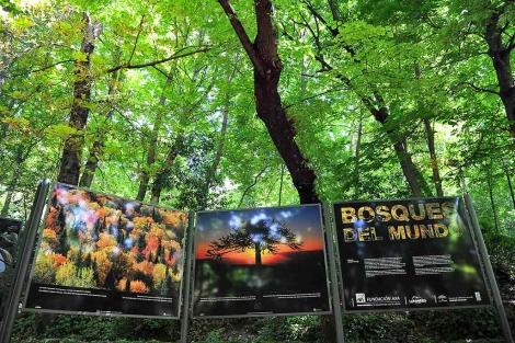 El bosque de la Alhambra acoge la exposición hasta el 15 de septiembre. | Jesús G. Hinchado