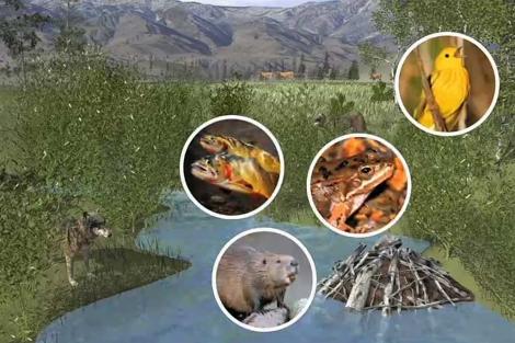 Recreación de un ecosistema en el Parque de Yellowstone (EEUU).   Science.