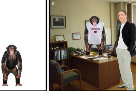 Imágenes contrapuestas muestran al chimpancé en situaciones distintas.| 'PLoS ONE'