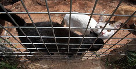 También hay gatos en el refugio de Ayandena. | Jesús Morón