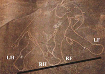 Análisis de una pintura rupestre en el estudio. | G. Horvath