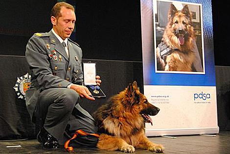 Imagen del perro Ajax