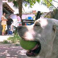 Animales que salvan vidas 1375110677_extras_ladillos_2_0