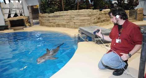 Experimento con la delfín Allison en el Zoo Brookfield.| JimSchulz/Chicago Zoological Society.