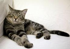 Gatos y gatoterapia: La Gatoteca de Madrid 1382206313_extras_portada_0
