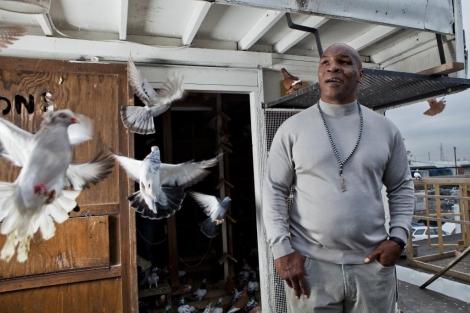 Mike Tyson, en una de sus aficiones, el mundo de las palomas. (MAT SZWAJKOS)
