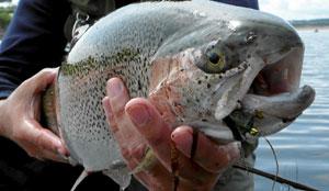 Una trucha recién pescada. (Foto: El Mundo)