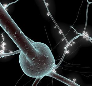 Recreación en 3D de una neurona realizada por Sebastián Lasserre. (Imagen: El Mundo)