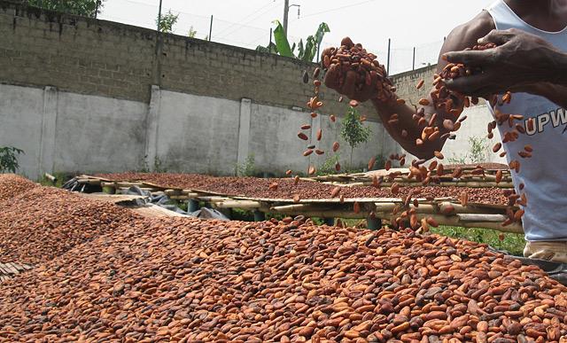 Granos de cacao. | Javier Espinosa